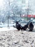 Конюшенко-Иван-У-природы-нет-плохой-погодыСОШ-№-60